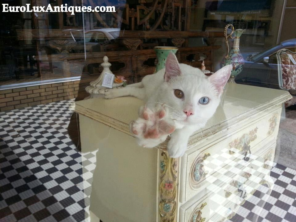 Squiggy in the window on the antique trail