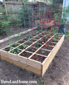 Raised boxes EarlyGarden2015