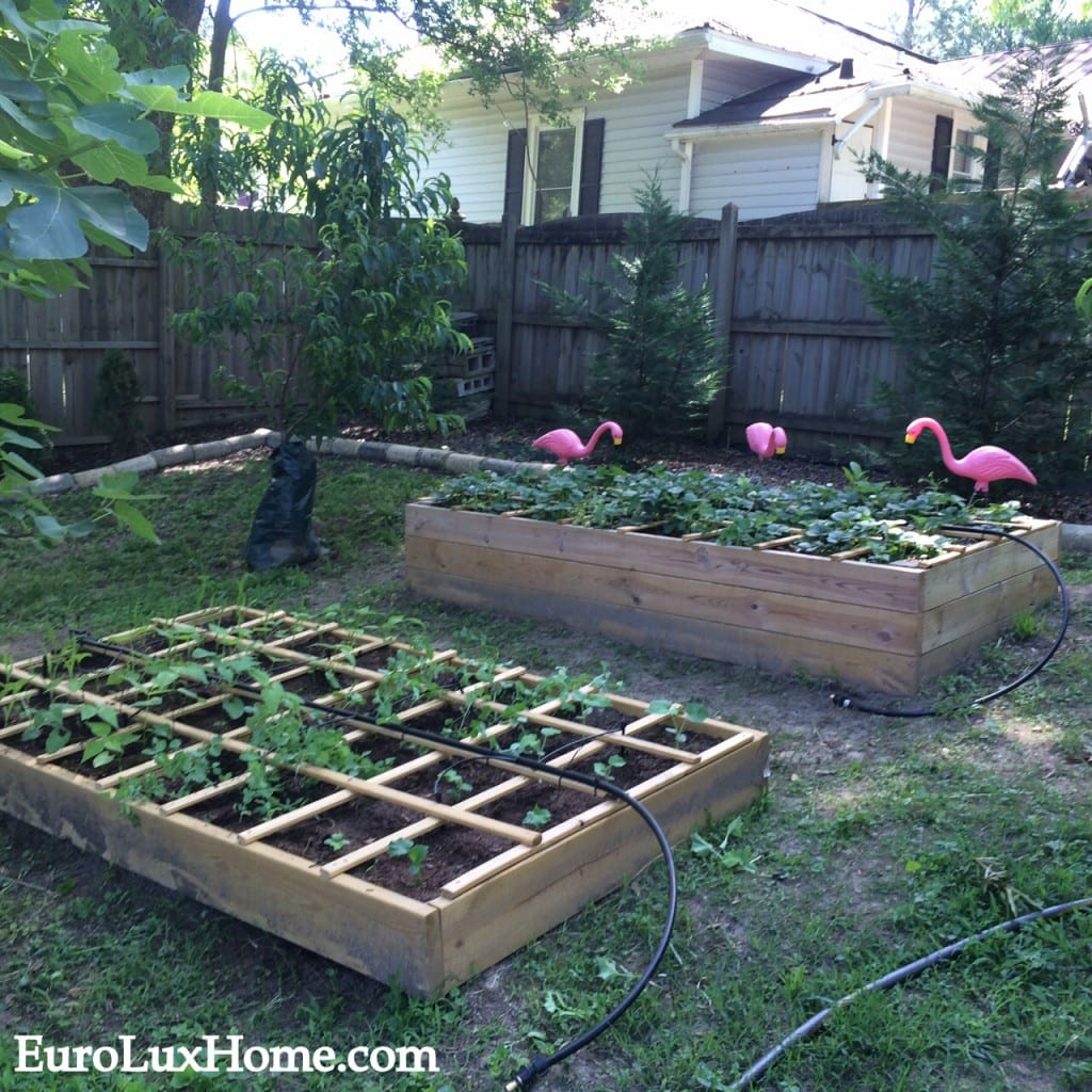 Raised bed garden 2015