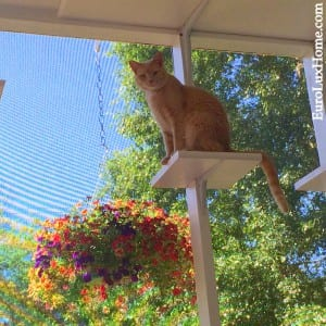 Fozzy cat on the cat porch